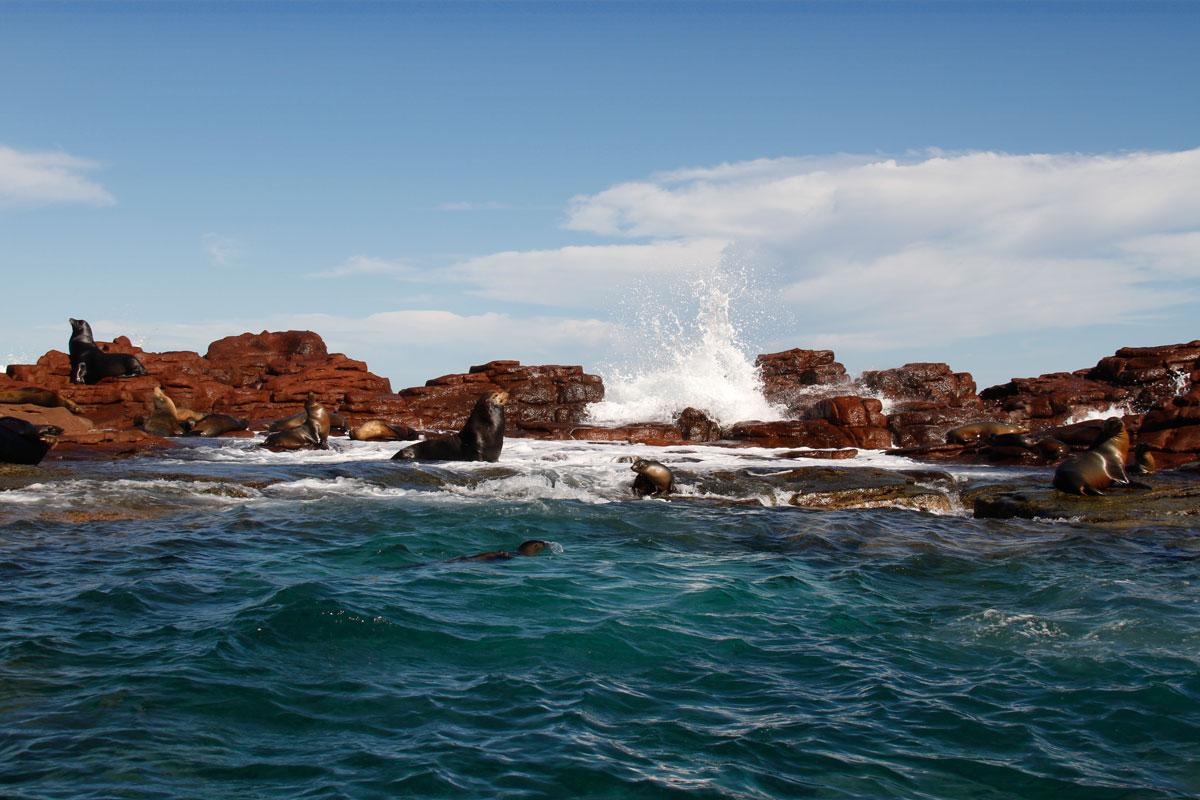【世界遺産】メキシコ・バハカリフォルニア半島『エル・ビスカイノ』から少し南へ下った場所に位置する自然保護区群