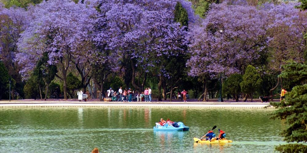 ハカランダを楽しめるスポットの一つ目はちゃぷるてペック公園。